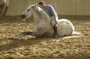 Le cheval et l'Homme