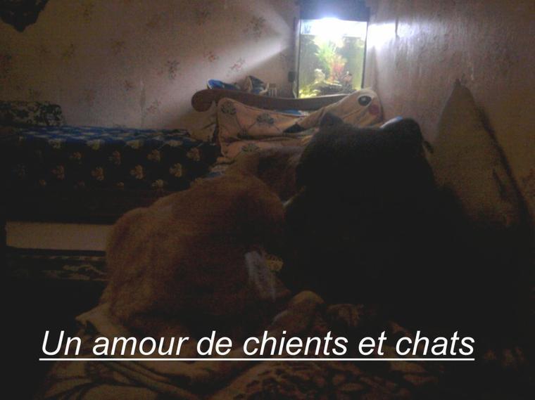un amour de chient et chat
