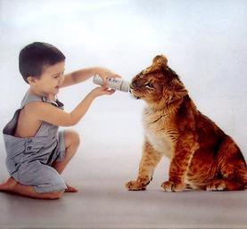 Possède Tu Un ou Plusieurs Animal De Compagnie ?