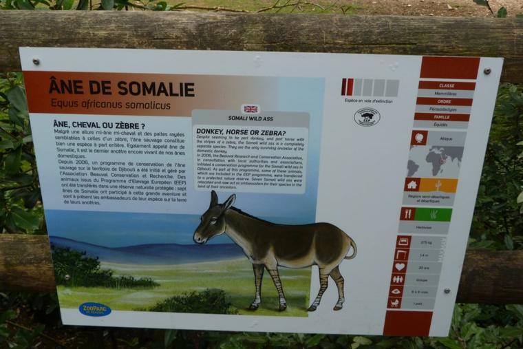 ANE DE SOMALIE