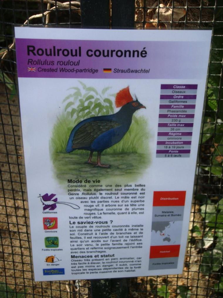 ROULROUL COURONNE