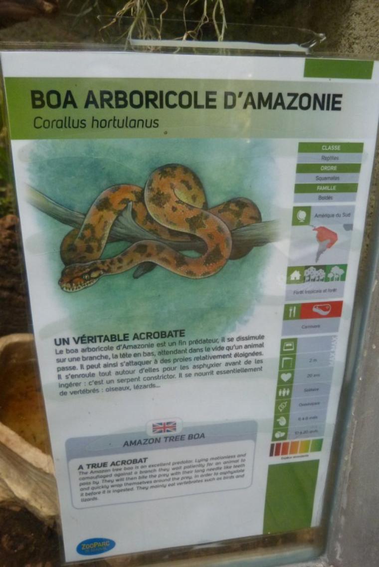 """BOA ARBORICOLE D""""AMAZONIE"""