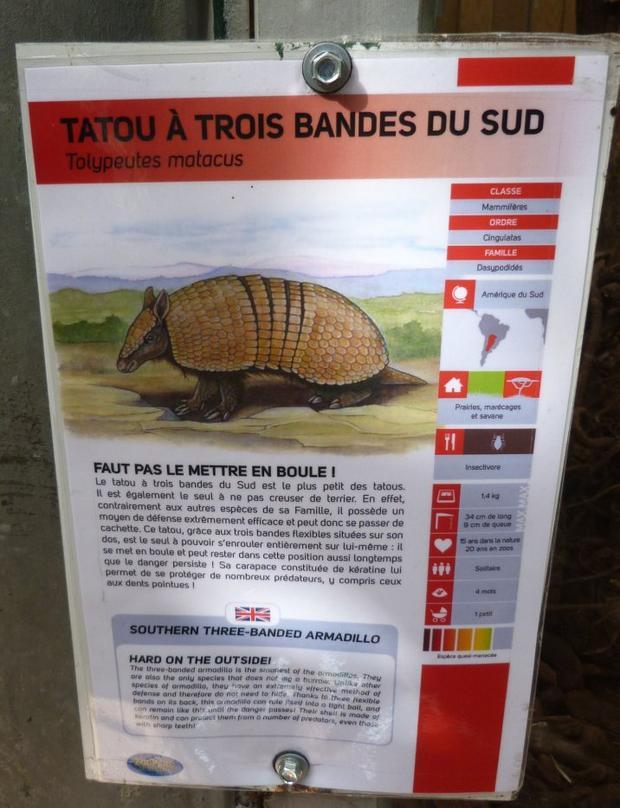 TATOU A 3 BANDES DU SUD