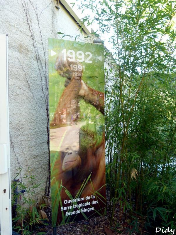 nouveaux panneaux dans les allées de beauval et statues (suite)
