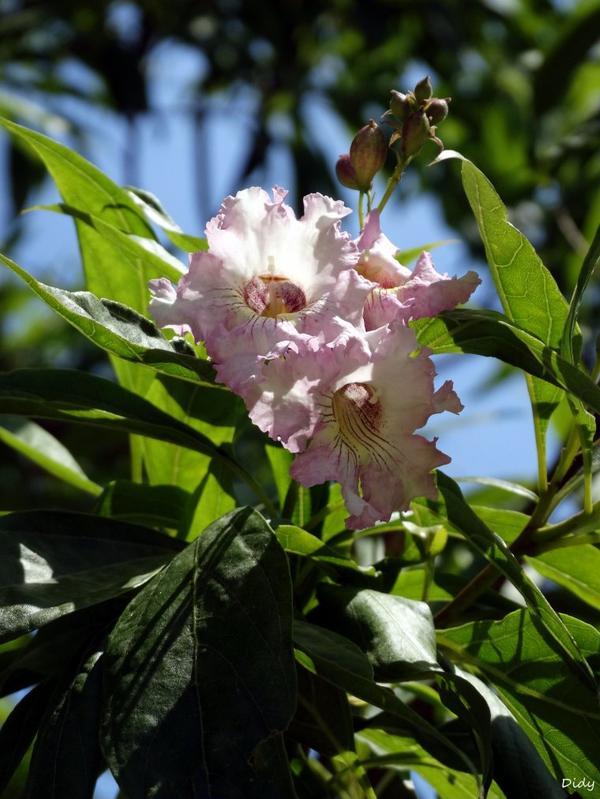 La flore des allées de Beauval - été 2014 suite 10