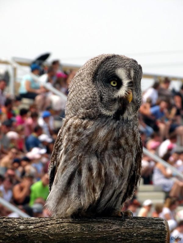 """nouveau spectacle d'oiseaux 2014 """"les maîtres des airs"""",le 19 Juillet 2014 suite"""