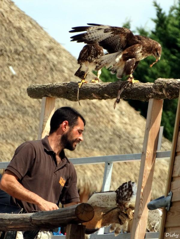 """nouveau spectacle d'oiseaux 2014 """"les maîtres des airs"""",le 1er Août suite 2"""