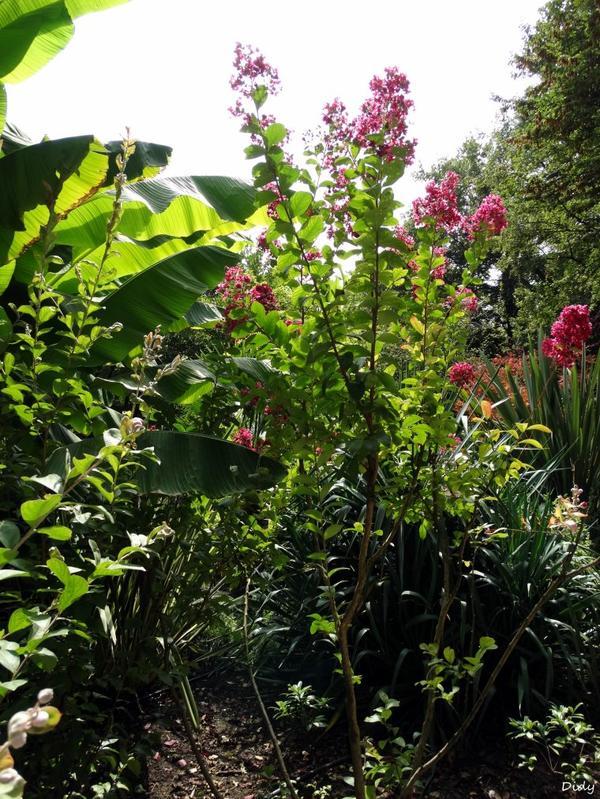 La flore des allées de Beauval - été 2014 suite 11