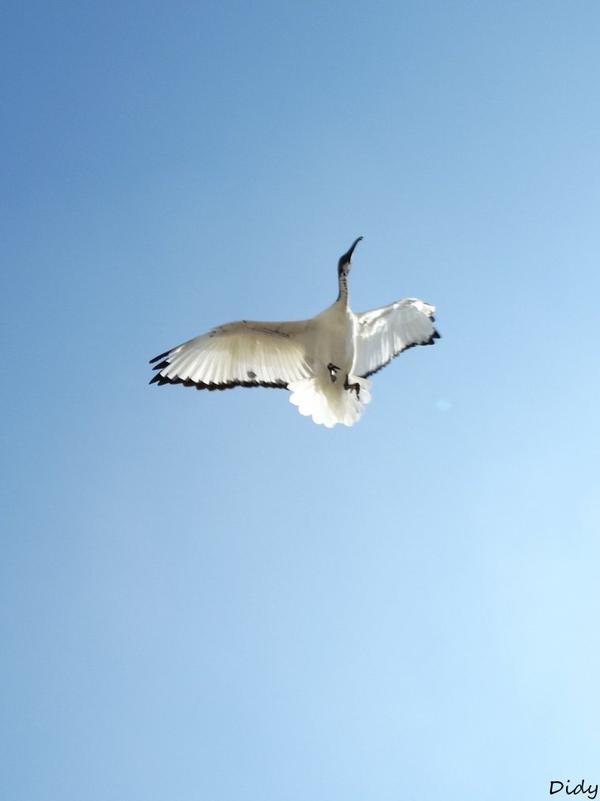 """nouveau spectacle d'oiseaux 2014 """"les maîtres des airs"""",le 7 septembre 2014 suite 4"""