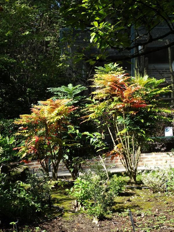 La flore des allées de Beauval - automne 2014 suite 12
