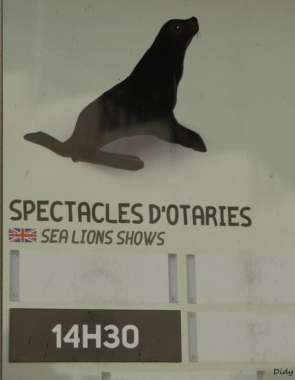 "2 Octobre  2014 ""spectacle d'otaries"""