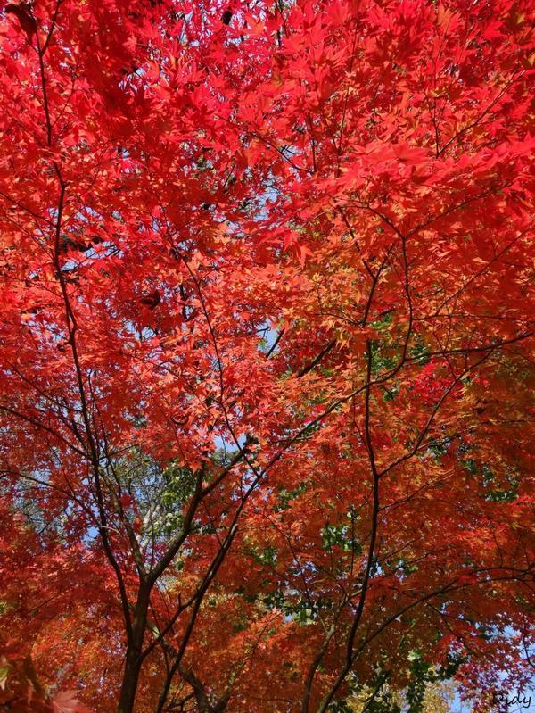 La flore des allées de Beauval - automne 2014 suite 15