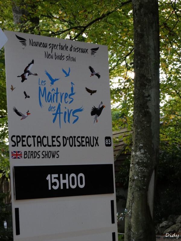 """nouveau spectacle d'oiseaux 2014 """"les maîtres des airs"""", le 10 Novembre 2014"""