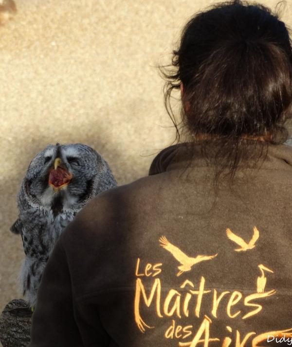 """nouveau spectacle d'oiseaux 2014 """"les maîtres des airs"""", le 10 Novembre 2014 suite"""