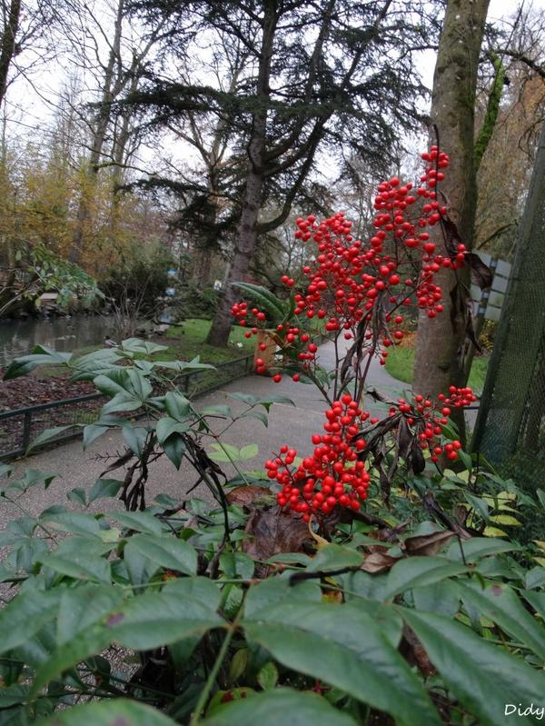 La flore des allées de Beauval - Automne Hiver 2014 2015 suite 16