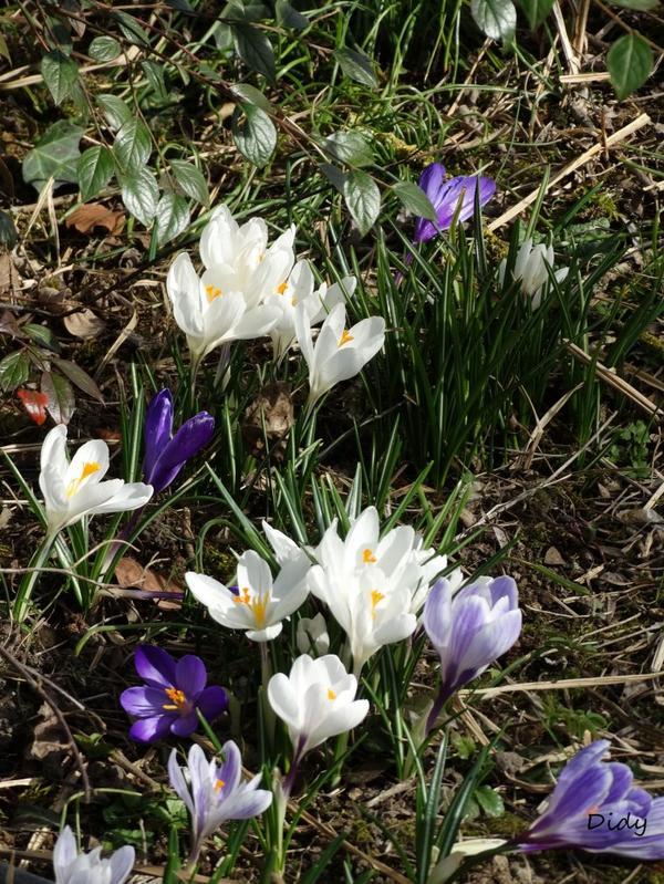La flore des allées de Beauval - Hiver 2015 suite 17