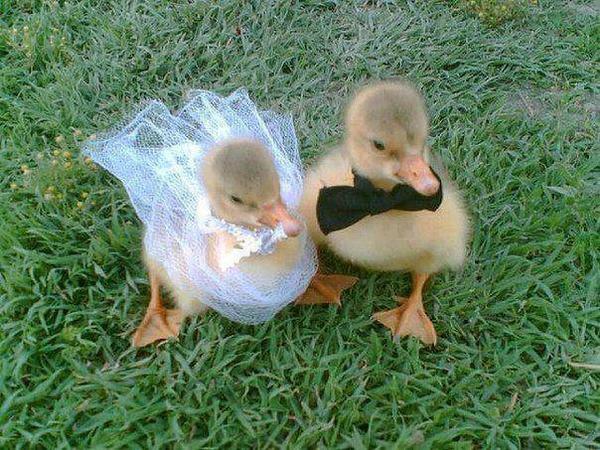 hoo les petits canards :$ sont trop mignons <3 ^^ jkiff