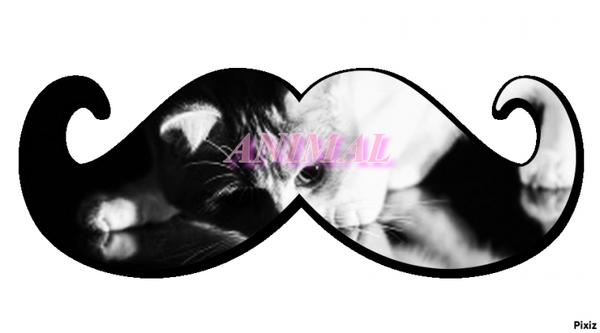 Un amour de ... cat ღ