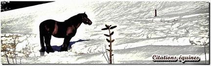 """""""chevaux"""""""