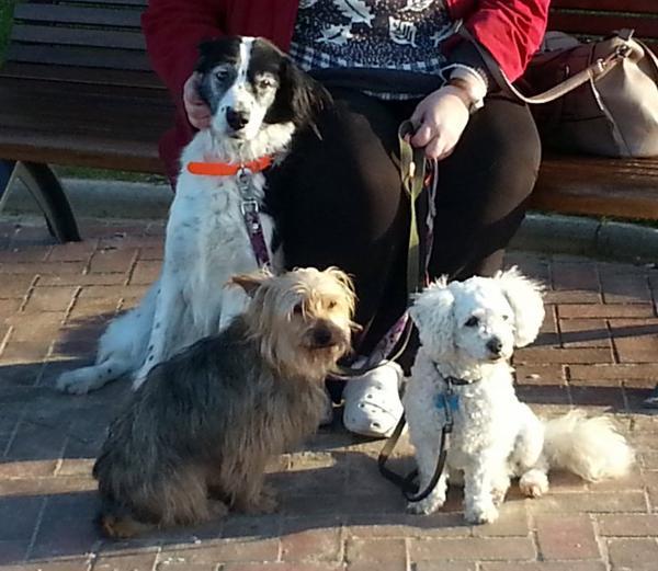une très belle rencontre ...ces trois chiens sagement assis ont attiré mon regard ..cette femme a adopté ces petits malheureux cela me touche beaucoup !!