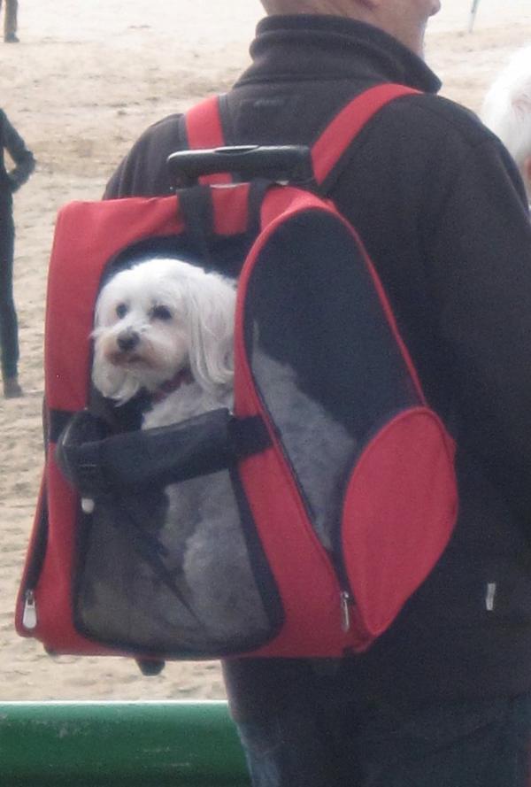 dimanche dernier un monde fou à Cabourg et le chien qui se balade dans le dos de son maitre .. bon weekend à toutes