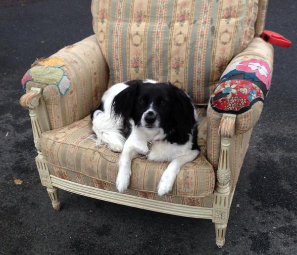 que serait mon blog sans une photo de chien et bien la voilà ....Cool les brocantes !!