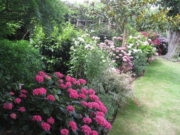 dans l'attente de faire des photos de poupées... je vous propose un petit tour de mon jardin en fin de saison la pluie commence à tout abimer!!