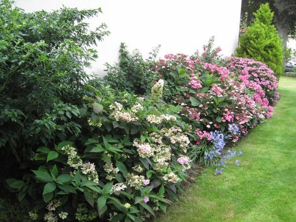 ma passion des fuchsias et hortensias est bien présente ....bonne semaine à toutes ...!