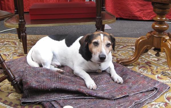enfin le chien du salon super calme surement un habitué ... la suite lundi bon week end !