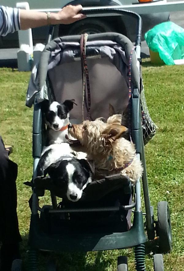comment faire une brocante avec 4 chiens dont un coincé derrière on ne voit que ses oreilles ..? cette dame a trouvé la solution ..bon week end à toutes !!!