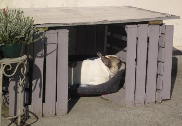 ce soir le chien de la fleuriste dormait confortablement installé dans sa petite cabane afin qu'il soit tranquille..il dormait bien !