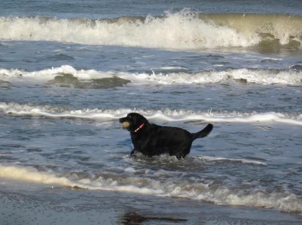 il fait très bon en ce moment et ma chienne en balade le matin en profite ..mon autre article la concernant a disparu ??