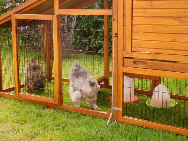 """suite et fin de la saga des poulettes la grise la plus maline se dit """"je rêve c'est ouvert"""""""