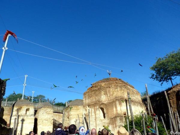 visite du BioParc de Doué La Fontaine (49) - 22 septembre 2013