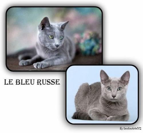 Le bleu russe