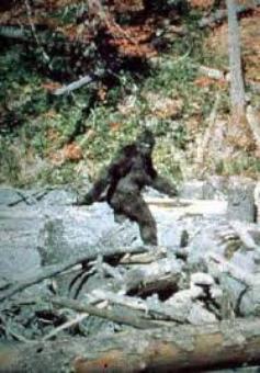 La Science prouve l'existance du  Bigfoot