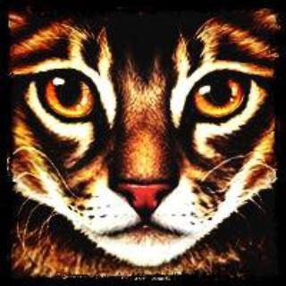 Etoile du Tigre (Tigerstar)