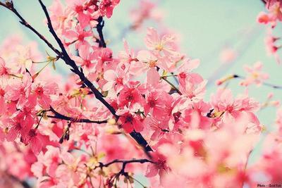 """""""Aussi froid que soit l'hiver, le printemps viendra. Après tous les chagrins, la joie renaîtra."""" Bambi."""