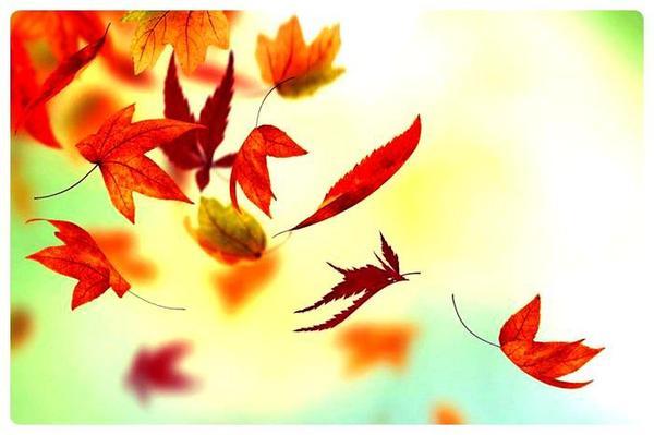 ✦ Fall Book Tag