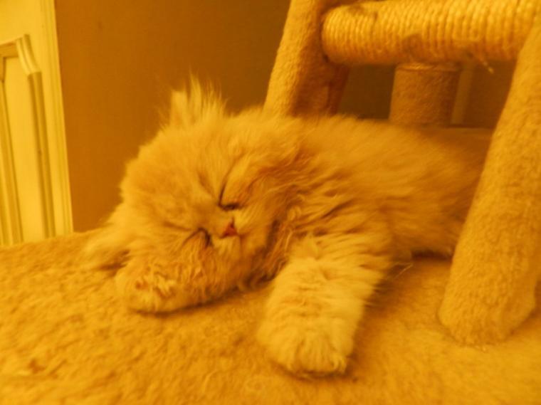 Chut Je dors.....