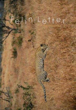 Felin'letter