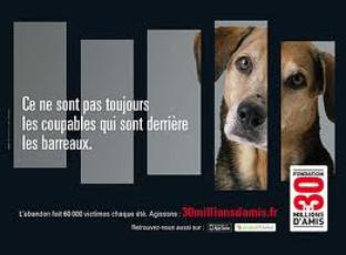 30 millions d'amis dénonce l'abandon des chiens !