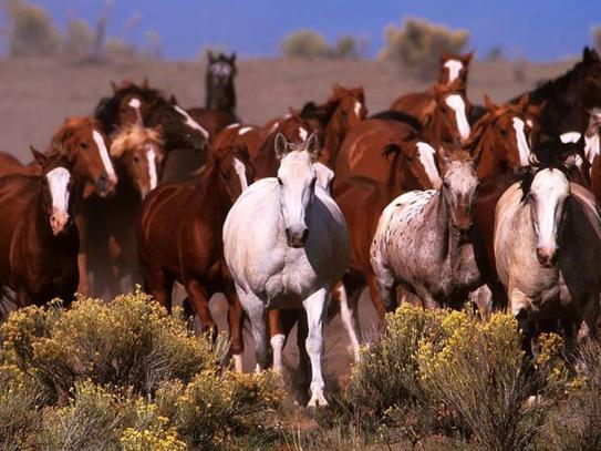 Les chevaux sauvages sont tellement beaux