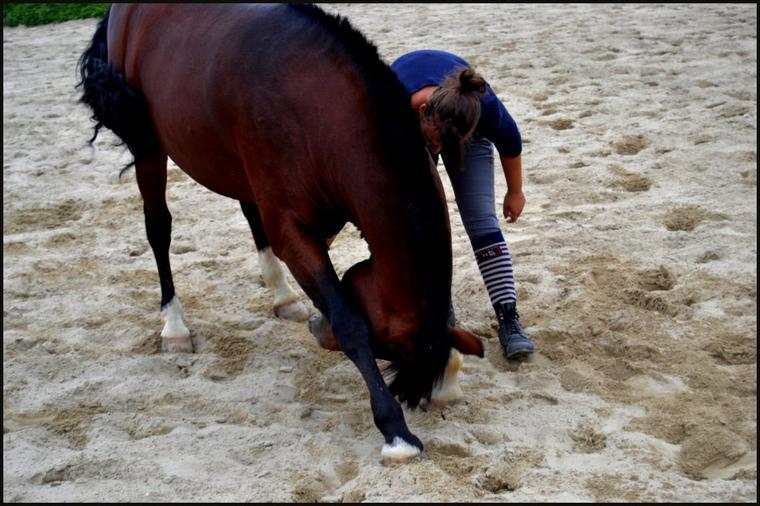 Si les chevaux nous portent c'est qu'ils sont gentils. Ils ont la gentillesse de nous supporter