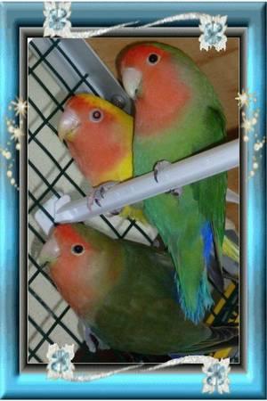 5 - Mes oiseaux