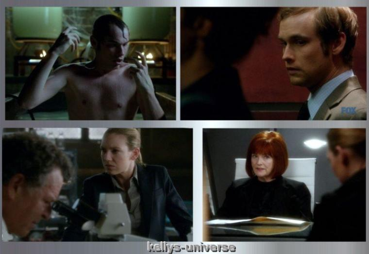 FRINGE 4 X 7 Wallflower