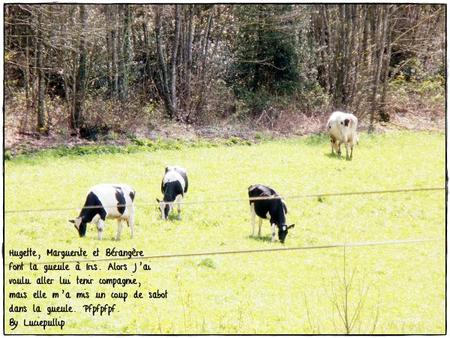 Un histoire vache...