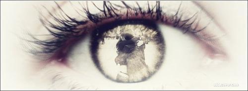 J'ai fait la chose la plus terrifiante et la plus dangereuse de ma vie quand je t'ai dit que je t'aimais. Mais ça valait le coup. J'ai réussi à surmonter ma peur pour toi... •GossipGirl