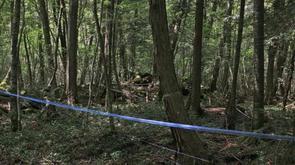 Aokigahara la forêt des suicides