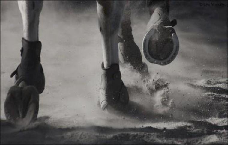 Quand l'équitation nous enmenne très loin ...